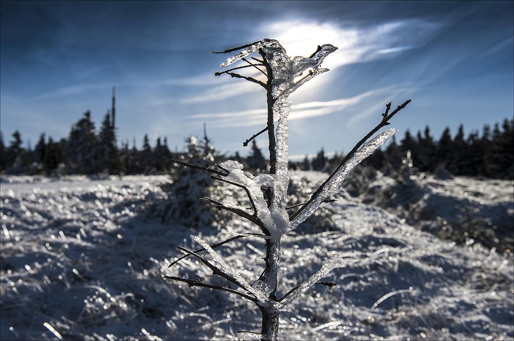 Eine dicke Eisschicht tragen die Bäume auf dem 1141 Meter hohen Gipfel des Brockens.