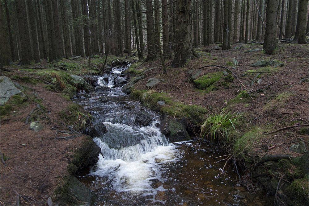 Ein Bach mit kleinen Kaskaden im Wald bei Drei Annen Hohne (Landkreis Harz) im Nationalpark Harz.