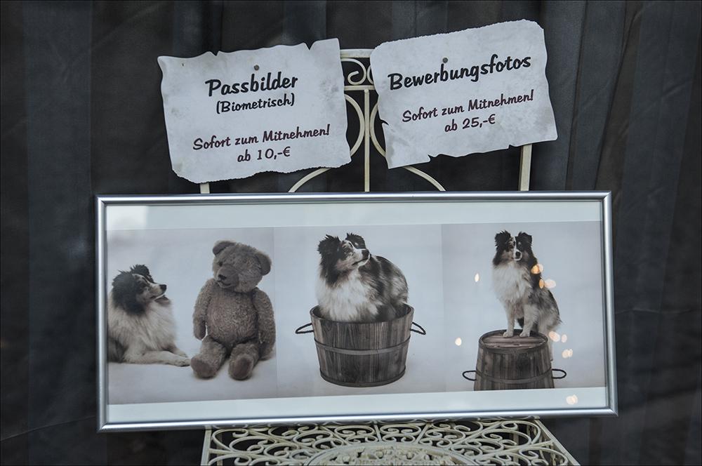 Ein Fotograf in der Altstadt von Blankenburg (Harz) wirbt im Schaufenster seines Geschäftes für Passbilder und Bewerbungsfotos.